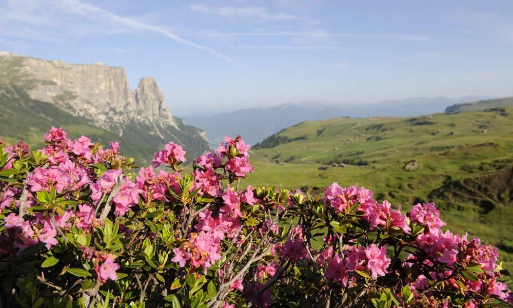 Einen herrlichen Frühling in den Bergen erleben
